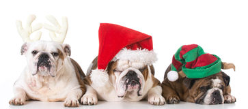 Three Christmas puppies Royalty Free Stock Images