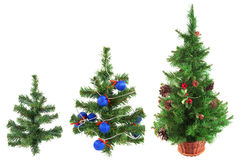 Three Christmas trees Royalty Free Stock Photo