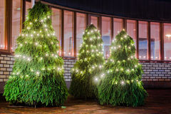 Three Christmas Trees. Lit in front of the town hall in the little town of Oulainen, Finland stock photos