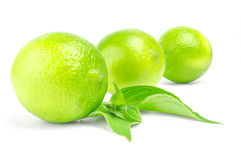 Three citrus Limes in row with leaves on a white background.  Royalty Free Stock Photography