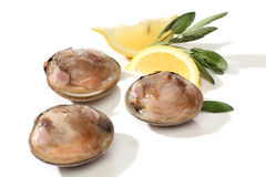 Three clams with lemon Royalty Free Stock Photography