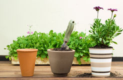Three Clay Flower Pots in a Row Stock Photos