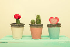 Three clay pot with cactus and Wooden Heart. Royalty Free Stock Photo