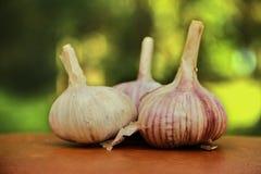 Three cloves of garlic on table Royalty Free Stock Photo