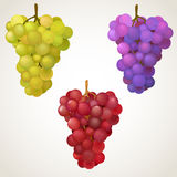 Three cluster of grape Royalty Free Stock Images