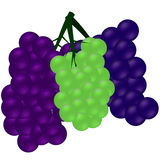 Three cluster of grapes Royalty Free Stock Image