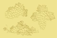 Three clusters of grapes Royalty Free Stock Photo
