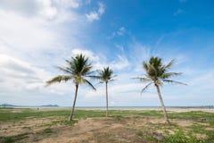 Three coconut palm tree on the beach Royalty Free Stock Photos