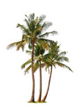 Three coconut palm trees Royalty Free Stock Photos