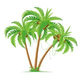 Three coconut palms Stock Photos