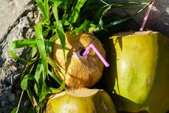 Three coconuts with straws Royalty Free Stock Photography