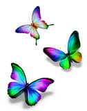 Three color butterflies. On white Royalty Free Stock Image