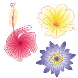 Three color flowers Royalty Free Stock Photography