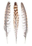 Three color forest bird feathers on white Stock Image