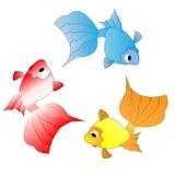 Three color goldfish Stock Photography
