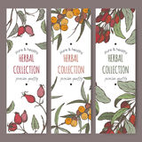 Three color labels with sea buckthorn, goji and dog rose. Royalty Free Stock Photos