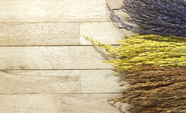 Three color of paddy rice on wood background. With soft light Stock Images