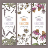 Three color vector herbal labels with peppermint, chamomile and echinacea. Set of three color vector herbal tea labels with peppermint, chamomile and echinacea royalty free illustration