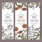 Three color vector herbal tea labels with valerian, calendula, sage. Set of three color vector herbal tea labels with valerian, calendula and sage on hand drawn Stock Photography