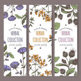 Three color vector labels with burdock, chicory, saint john wort Stock Image