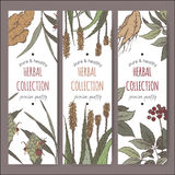 Three color vector labels with ginger, aloe and ginseng sketch. Stock Photos