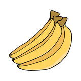 Three colored banana. Sketch. Vector isolated image. Stock Photography
