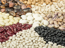Three colored beans. On white background stock photo