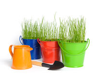Colored buckets with grass. Three colored buckets with grass and one orange water can on a white background. There is a small shovel in the foreground. Buckets Royalty Free Stock Photos
