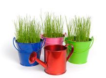 Tree colored buckets with grass. Three colored buckets with grass and one red water can on a white background. Buckets and can made of metal Stock Photos