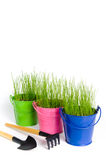 Gardening tools and colored buckets with grass. Three colored buckets with grass on a white background. There are rake and shovel in the foreground. Buckets made Stock Image