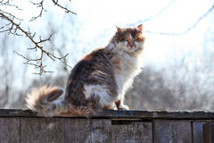 Three-colored cat on a fence Royalty Free Stock Photos