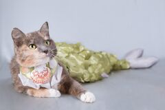 Three-colored cat mermaid lies on a gray background. Her breasts are decorated with shells.