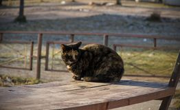 Three-colored cat sitting on a bench royalty free stock photo