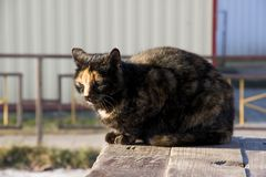 Three-colored cat sitting on a bench stock images