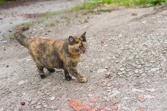 Three colored cat on a street Royalty Free Stock Photography