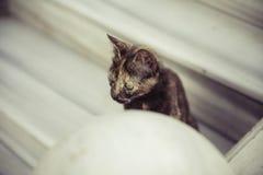 Tortoiseshell cat in the street Royalty Free Stock Photos