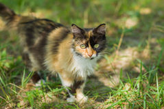 Three colored cat Stock Images