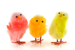 Three colored chicken Stock Photo