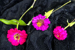 Three colored flowers Stock Photography