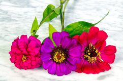 Three colored flowers Royalty Free Stock Image