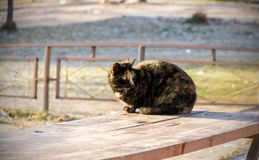 Three-colored cat sitting on a bench royalty free stock photos