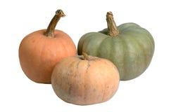 Three colored pumpkins Stock Photos