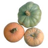 Three colored pumpkins Stock Image
