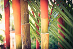 Three-colored thai bamboo Stock Images