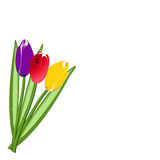 Three colored tulip Royalty Free Stock Photos