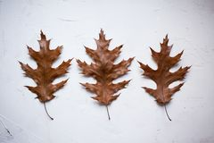 three colorful autumn leaves on white textured background stock images