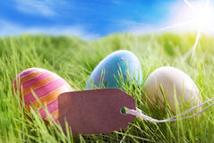 Three Colorful Easter Eggs On Sunny Green Grass With Label With Copy Space Royalty Free Stock Photos