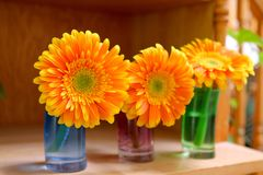 Three colorful flowers on the desk. stock photos