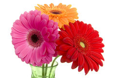 Three colorful gerber daisies in vase Royalty Free Stock Photo