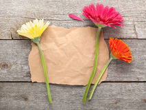 Three colorful gerbera flowers with paper for copy space Royalty Free Stock Images